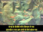 चेन्नई: वीजीपी मरीन किंगडम में समुद्री जीवों के बारे में लीजिये जानकारी