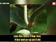 टाइम-लैप्स विडियो में दिखा जंगल में कैसे संघर्ष कर बड़े होते हैं पौधे
