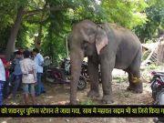 दिल्ली की इकलौती लापता हथिनी लक्ष्मी बरामद, महावत गिरफ्तार