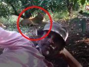 जब गिर नैशनल पार्क में शेरनी के सामने लेटकर विडियो बनवाने लगा शख्स