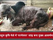 बेंगलुरु कृषि मेले में 'परमेश्वर' सांड बना मुख्य आकर्षण