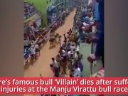 Tamil Nadu: Vellore's famous bull 'Villain' dies after injuries from Manju Virattu race