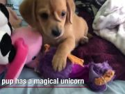 This pup has a magical unicorn