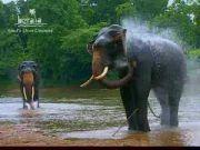 Travel Video, Kerala, India