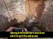 VIDEO: कुएं में गिरा हाथी का बच्चा, जान बचते ही जंगल में भागा