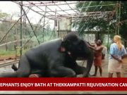 Watch: Elephants enjoy bath at Thekkampatti rejuvenation camp