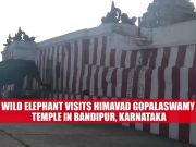 Watch: Wild elephant offers prayer at Karnataka's Himavad Gopalaswamy Temple
