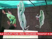 WWF organizes Frogfest to celebrate frogs in art and nature
