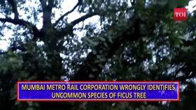 St Xavier's students urge Mumbai Metro to spare rare tree