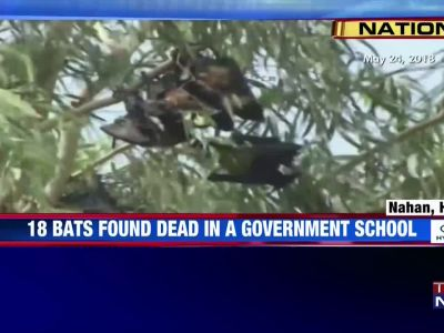 18 bats found dead at a school in HP, locals suspect Nipah virus attack