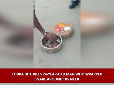 Andhra Pradesh: Cobra bite kills 24-year-old man who wrapped snake around the neck