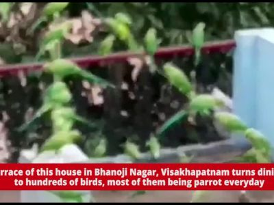 Daana Pani: This man feeds nearly 600 parrots thrice a day