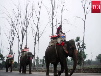 Delhi's last six elephants await marching orders