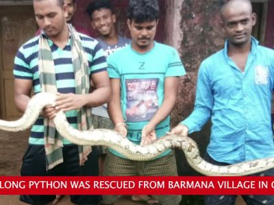 Eight-feet long python rescued in Odisha's Baramana village