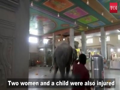 Elephant crushes mahout to death inside a temple in Tamil Nadu