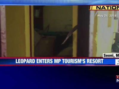 Leopard enters MP Tourism's resort, creates panic
