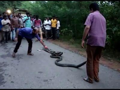 On cam: 13-ft king cobra rescued in Mangaluru