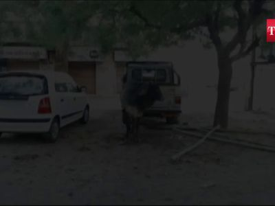 On cam: Bull stuck under car rescued by locals