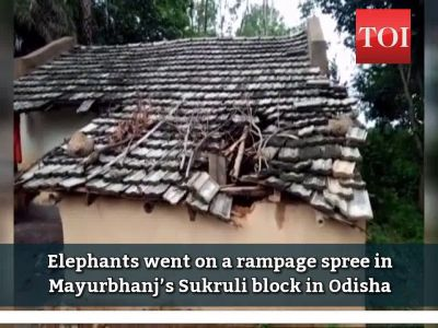 On cam: Elephants on a rampage spree in Odisha's Mayurbhanj