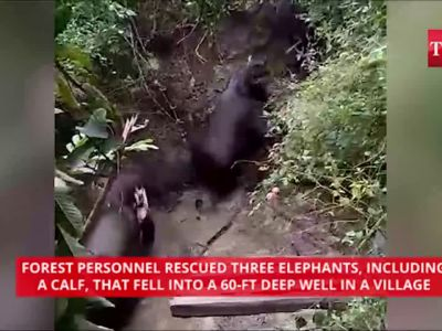 On cam: Four elephants rescued from 60-ft well in Tamil Nadu