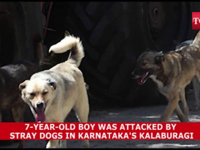 Shocking! 7-year-old boy attacked by stray dogs in Karnataka's Kalaburagi