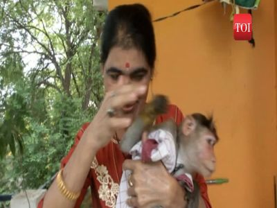 This lady cop saves little monkey's life, gives it shelter