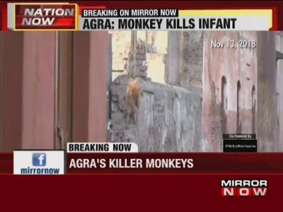 UP: Monkey kills infant in Agra