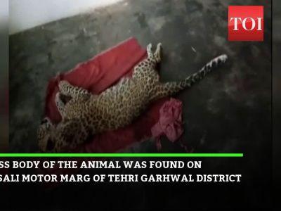 Uttarakhand: Forest officials recover carcass of leopard