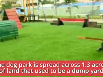 Watch: India's first dog park that has exercise equipment, splash pool and more for your canine friend