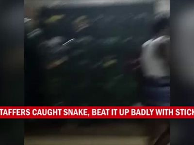 Watch: Venomous snake sneaks into crew room of bus depot